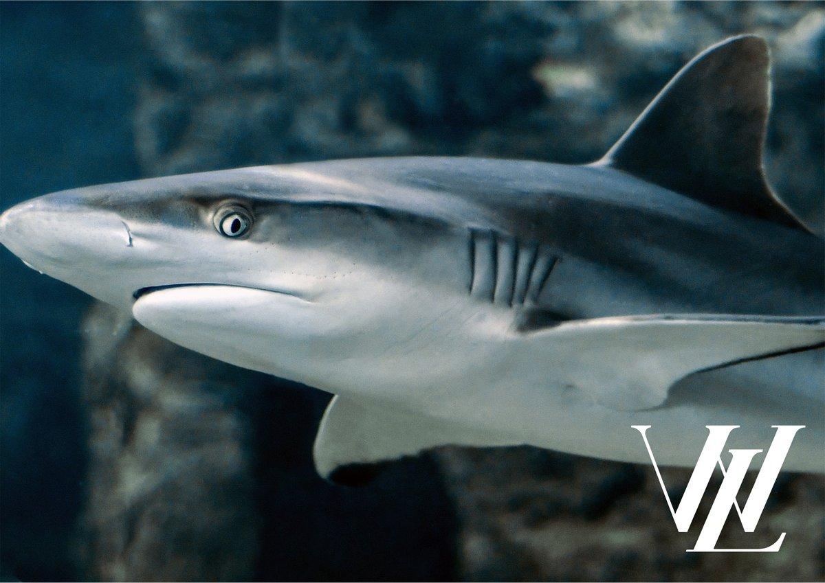 4. Акула