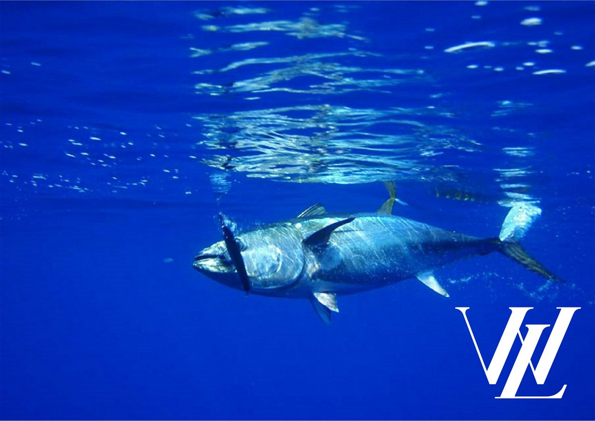 3. Голубой тунец