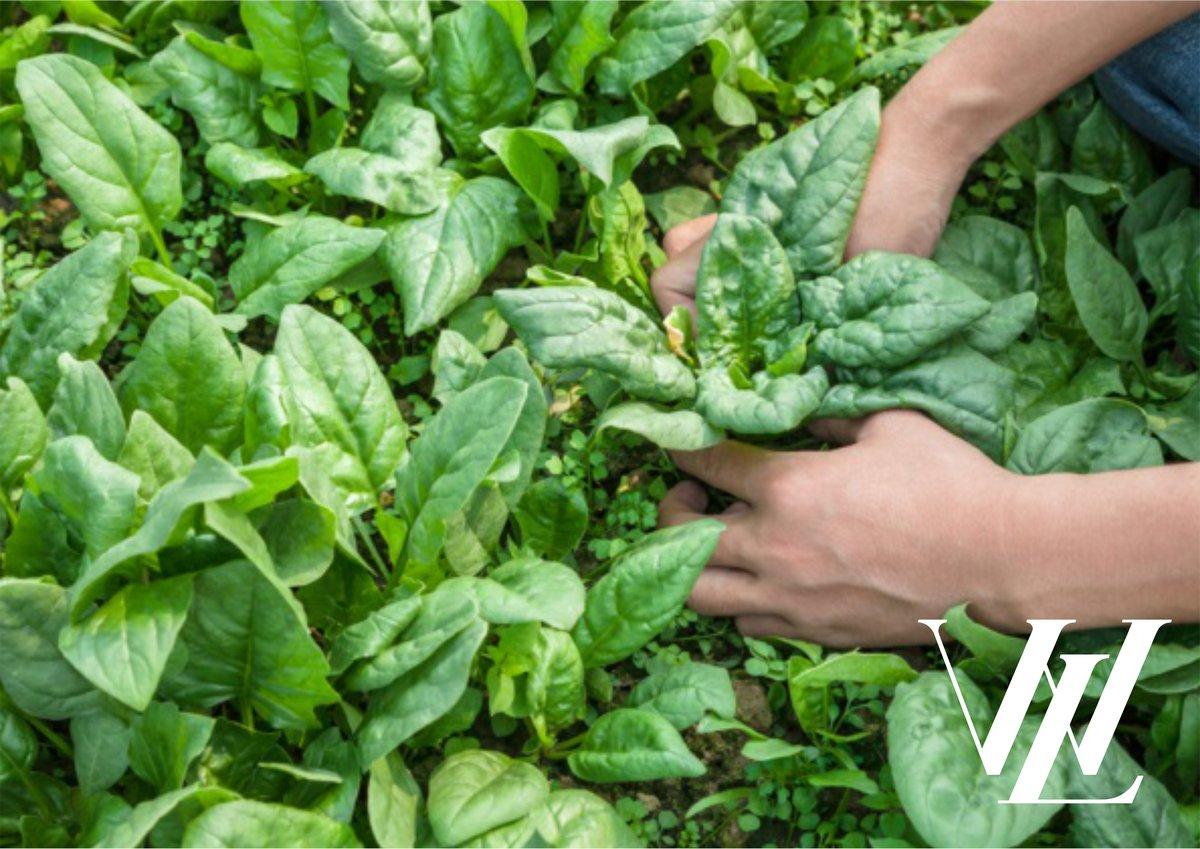 Топ-7 продуктов, которые уберегут от заболеваний щитовидки